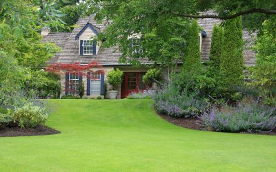 Four Summer Lawn Care Tips To Keep Your Lawn Healthy