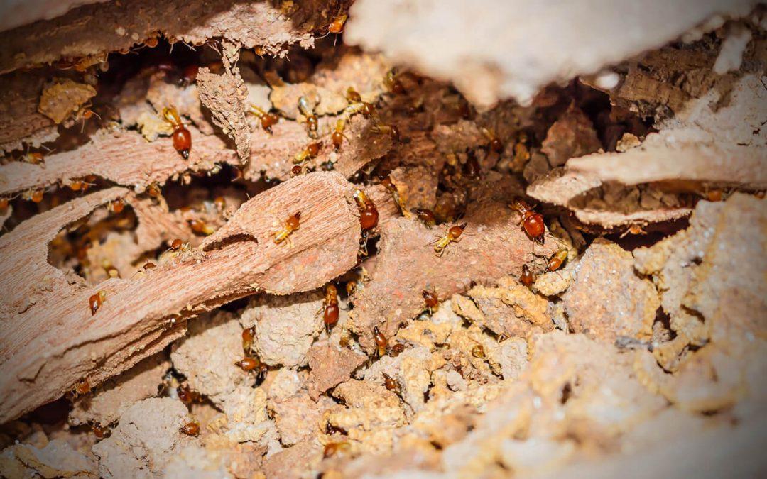 Help Protect Your Home From Termites