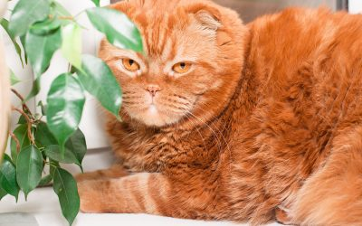5 Pet-Friendly Houseplants